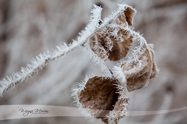Hoar Frost Eagan Minnesota Morning