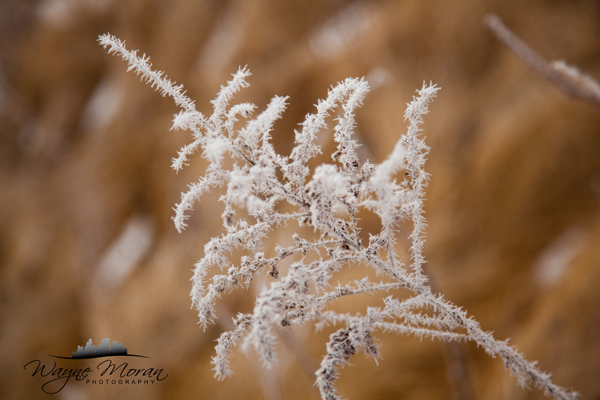 HoarFrost Eagan Minnesota Morning